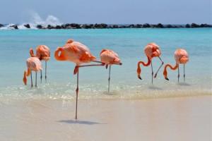 resort-renassaince-aruba-caribe-1